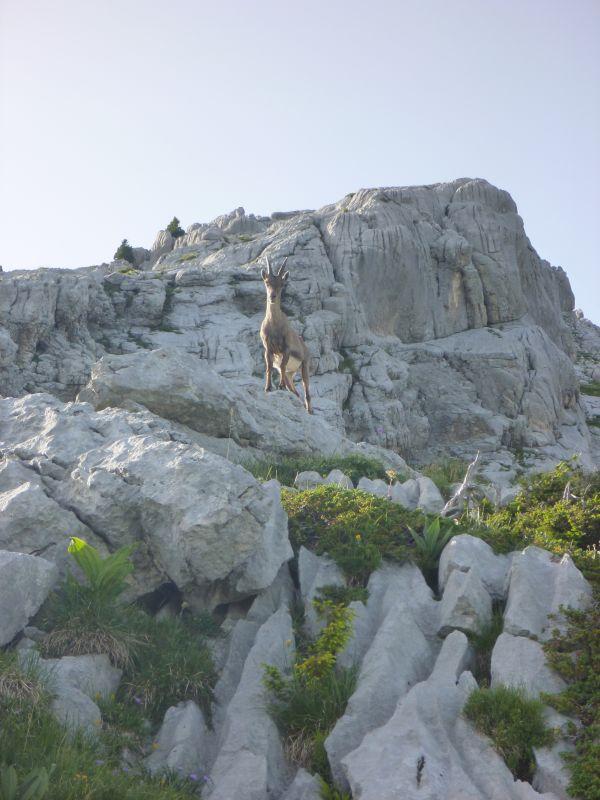 La Tour du Jallouvre: legrandbornand024.jpg
